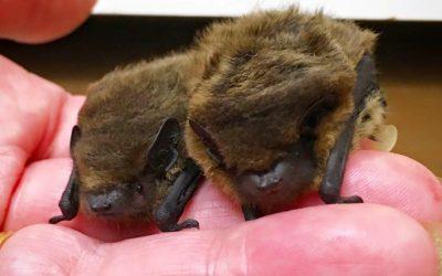 IW Bat Hospital